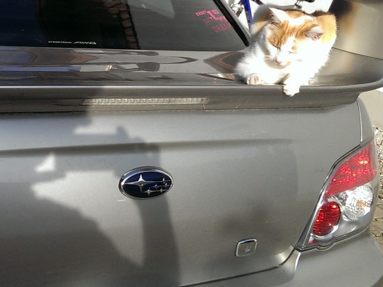 Selbst mein Kater liebt das Auto